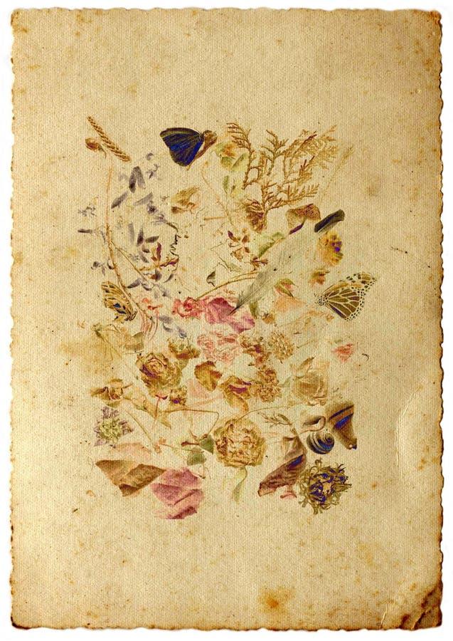 Todavía vida con la mariposa fotografía de archivo