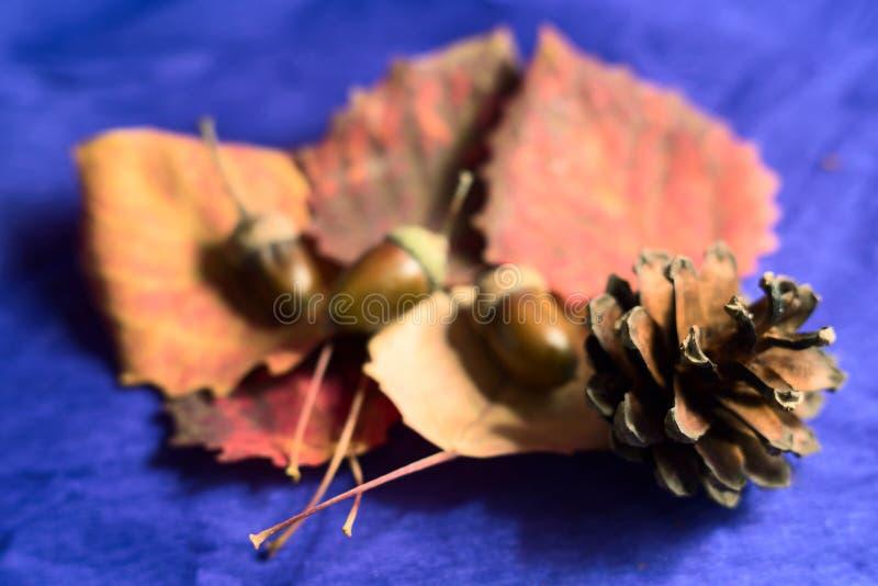 Todavía vida con las bellotas, hojas, cono del pino foto de archivo
