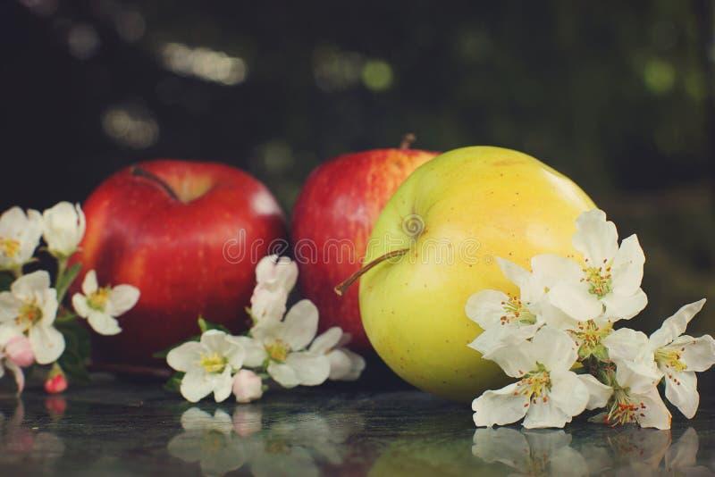 Todavía vida con las manzanas rojas y amarillas y las flores blancas delicadas en la tabla fotos de archivo