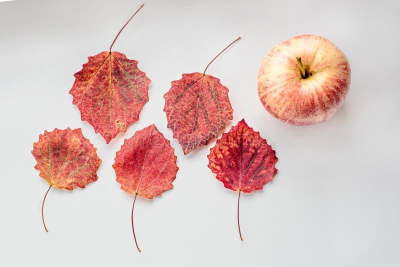 Todavía vida de hojas de arce y de la manzana foto de archivo