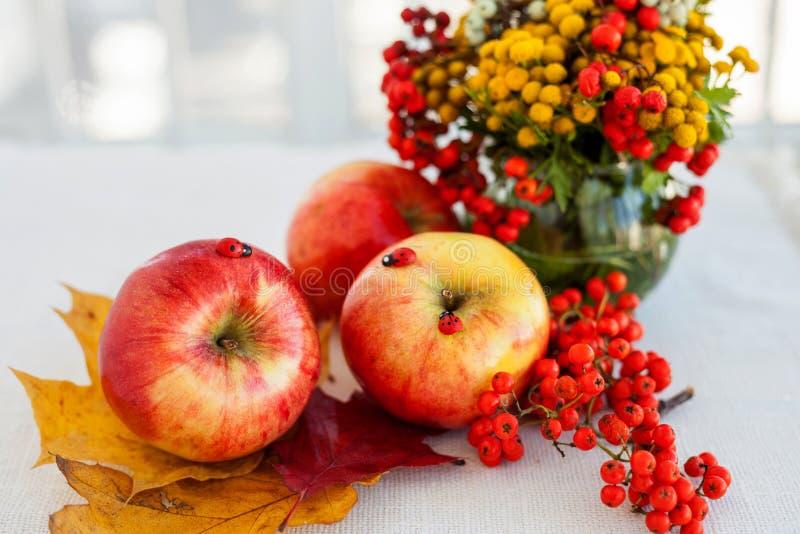 Todavía vida de manzanas maduras rojas en las espiguillas foto de archivo