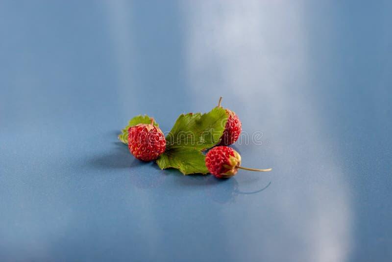 Todavía vida de tres fresas y de una hoja en las baldosas cerámicas azules Foco selectivo imagen de archivo libre de regalías