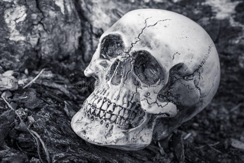 Todavía vida del cráneo en fondo secado del árbol imagen de archivo libre de regalías