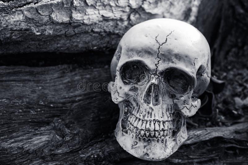 Todavía vida del cráneo en fondo secado del árbol fotografía de archivo libre de regalías