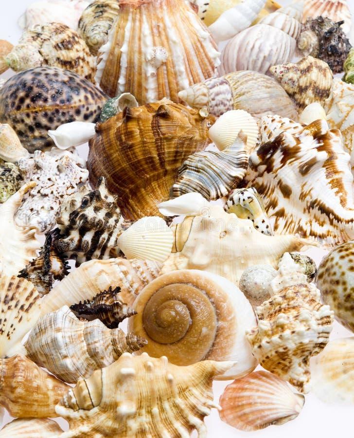 Todav?a vida de conchas marinas fotografía de archivo libre de regalías