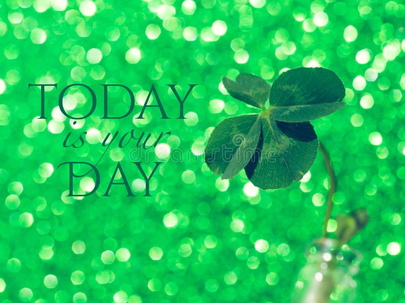 Today is your day - inspirational motivation quote. Fresh green lucky four leaf clover on green sparkling background. Beautiful st patrick`s day concept. Close royalty free stock image