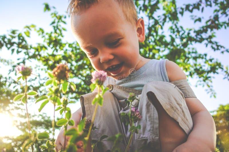 Cute child enjoying summer meadow stock image