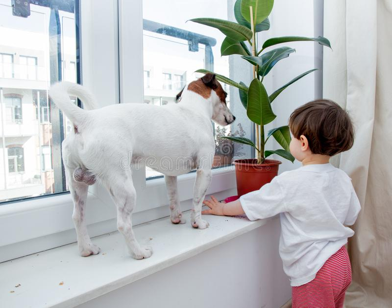 Toddler boy with dog and plant near window stock photography