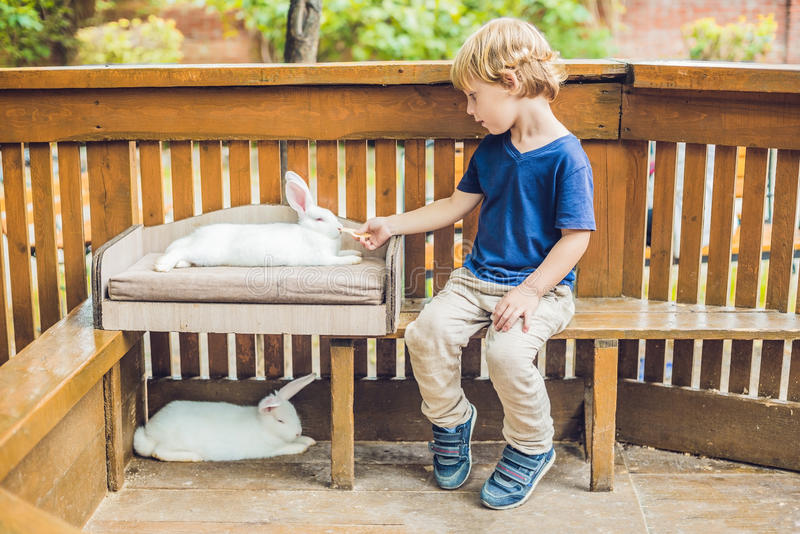 Toddler boy feeds rabbit in the petting zoo. concept of sustainability, love of nature, respect for the world and love for animals royalty free stock image