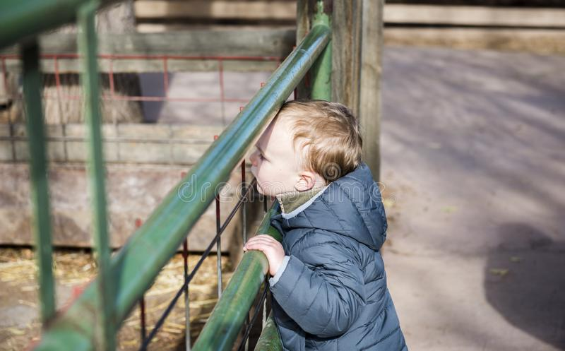 Toddler Boy at a Local Farm Watching Horses Through a Green Iron. Gate royalty free stock photos