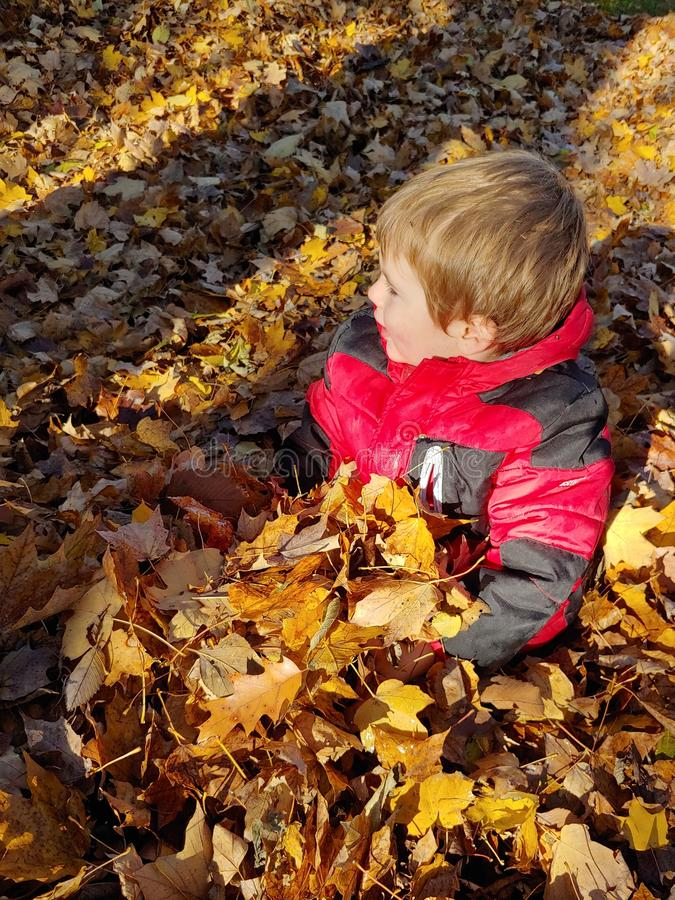 Toddler boy in red jacket playing in autumn leaves royalty free stock photography