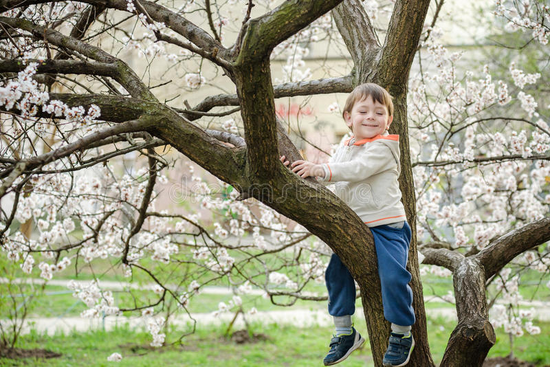 Toddler boy in spring time near the blossom tree. Smiling happy boy stock photos