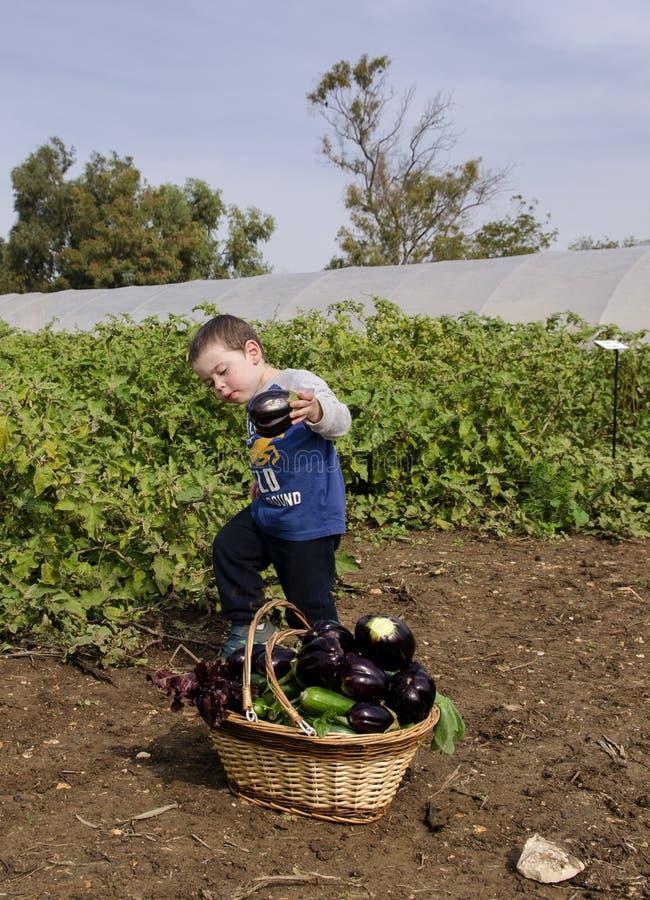 Toddler boy at vegetables self-picking royalty free stock images