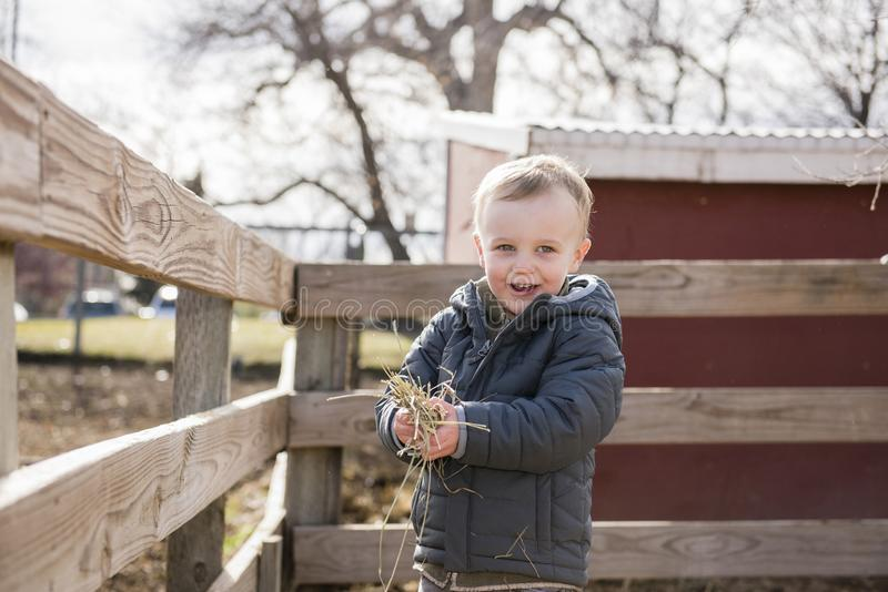 Toddler Boy Visiting a Local Urban Farm and Feeding the Cows. With Hay stock images