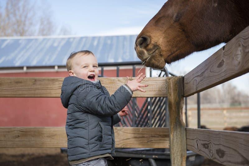 Toddler Boy Visiting a Local Urban Farm and Feeding the Horses royalty free stock photos