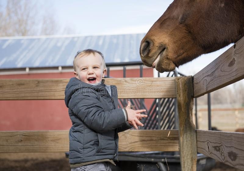 Toddler Boy Visiting a Local Urban Farm and Feeding the Horses w. Ith Hay. Smiling & Laughing stock photos