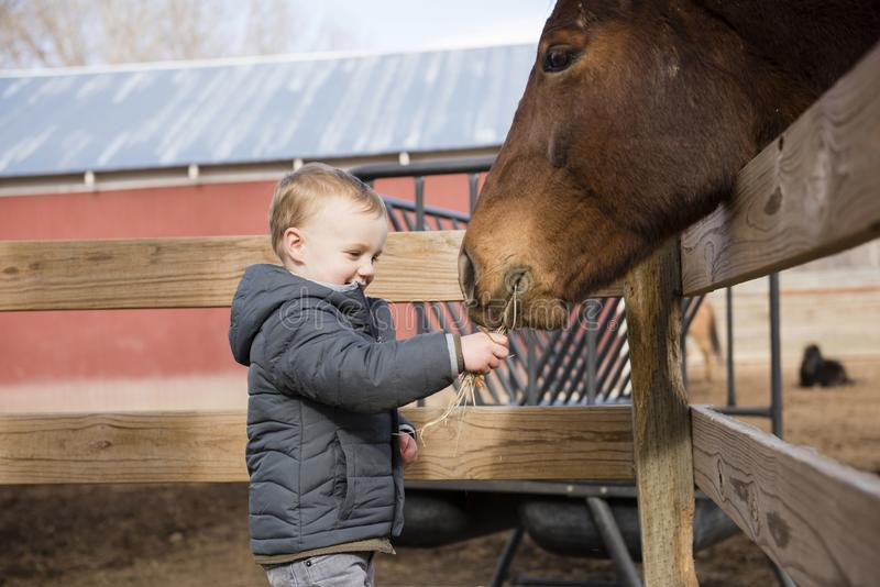 Toddler Boy Visiting a Local Urban Farm and Feeding the Horses w. Ith Hay. Smiling & Laughing royalty free stock photography