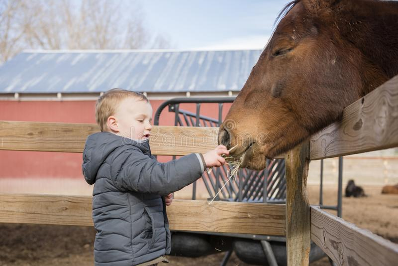 Toddler Boy Visiting a Local Urban Farm and Feeding the Horses w. Ith Hay stock photography