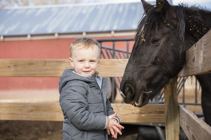 Toddler Boy Visiting a Local Urban Farm and Feeding the Horses w. Ith Hay. Smiling & Laughing stock photography