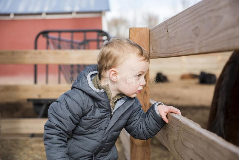 Toddler Boy Visiting a Local Urban Farm Looking at Horses Through a Wooden Fence royalty free stock image