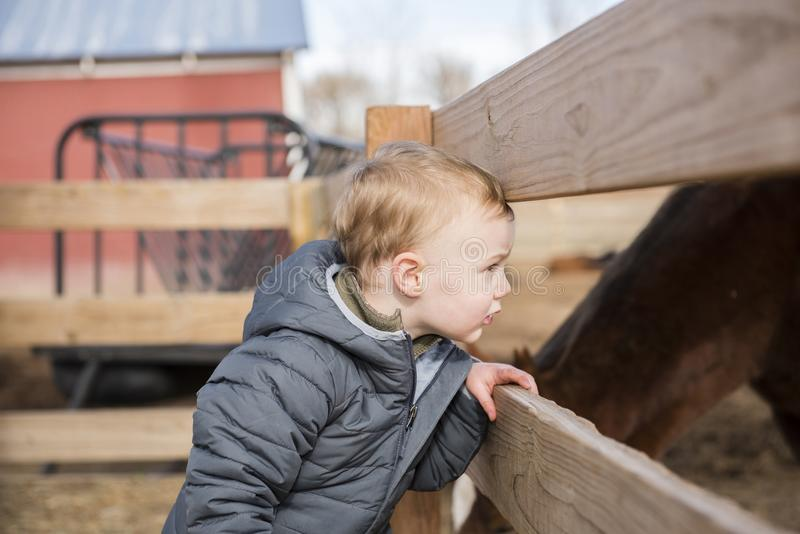 Toddler Boy Visiting a Local Urban Farm Looking at Horses. Through a Wooden Fence stock photo