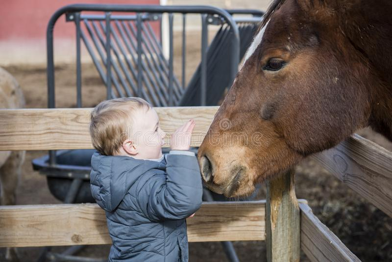 Toddler Boy Visiting a Local Urban Farm Petting a Horse`s Head. Smiling stock photography