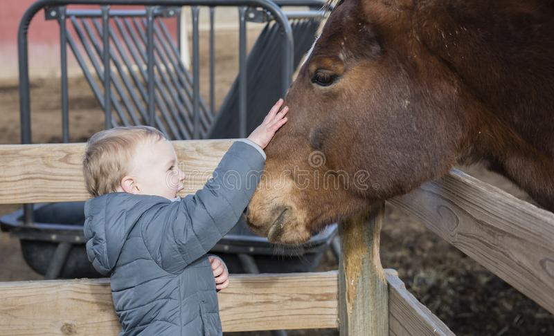 Toddler Boy Visiting a Local Urban Farm Petting a Horse`s Head. Smiling & Laughing royalty free stock image