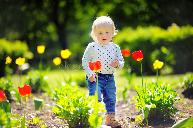 Toddler Boy Walking In The Garden At The Spring Or Summer Day