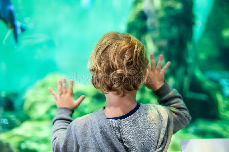 Toddler boy watches fishes in aquarium royalty free stock images