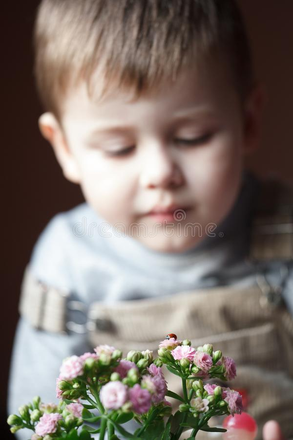 Toddler child looking at a ladybug. Selective focus on flower. Toddler child looking at a ladybug. Little scientist entomologist observes insects royalty free stock photo