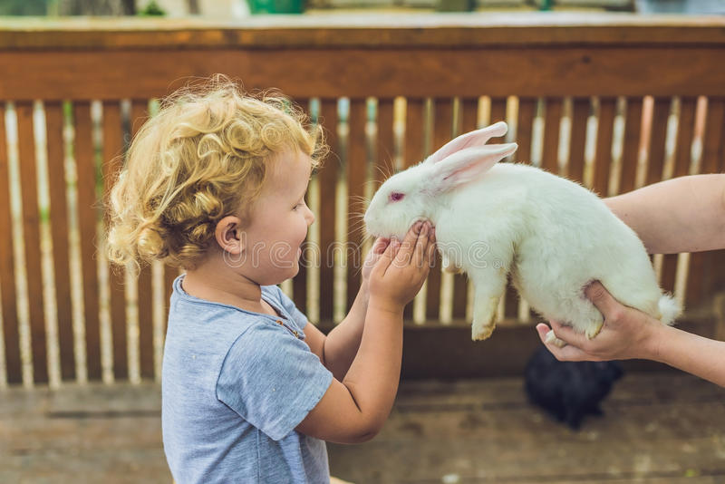 Toddler girl caresses and playing with rabbit in the petting zoo royalty free stock photo
