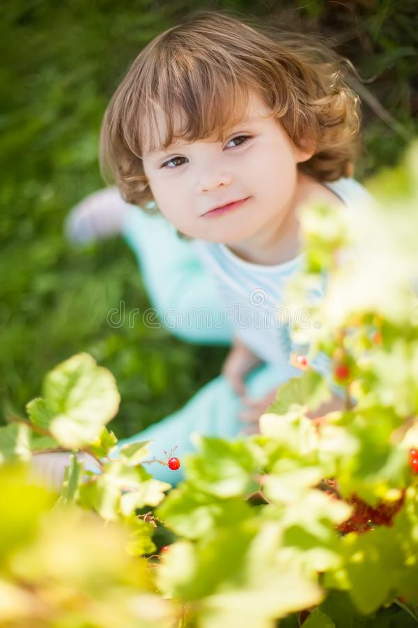 Toddler girl eats red black currant from the bush. Having fun. royalty free stock photography