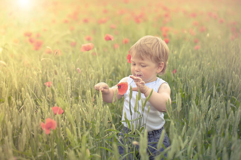 Download Toddler in poppy field stock photo. Image of summer, baby - 26636472