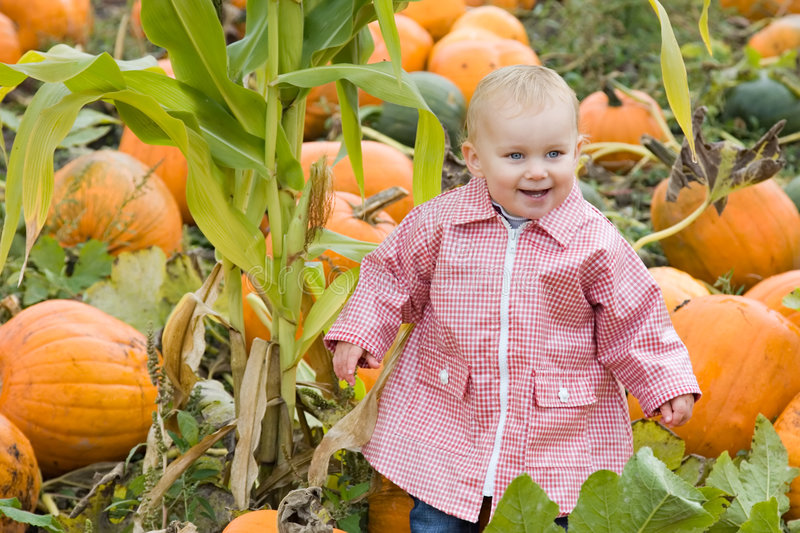 Download Toddler in pumpkin patch stock photo. Image of harvest - 3321904