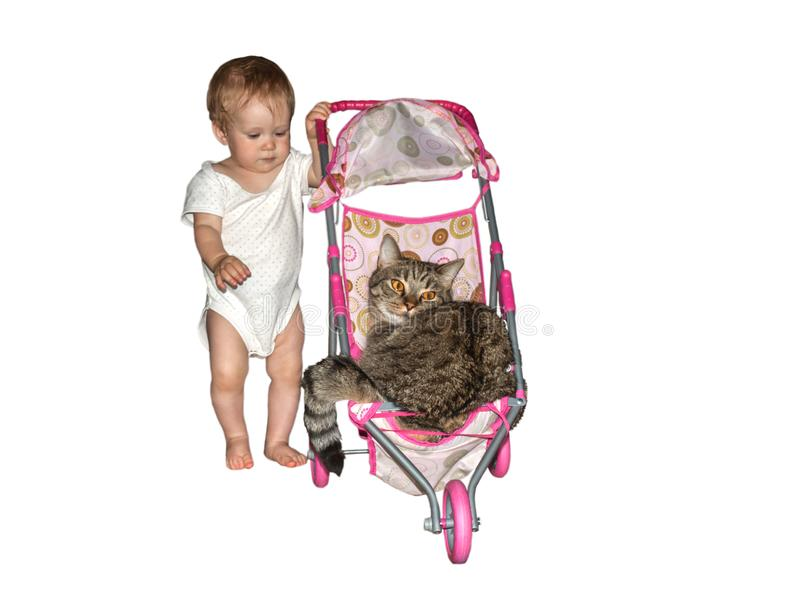 Toddler rolls his big cat in a small baby toy stroller stock image