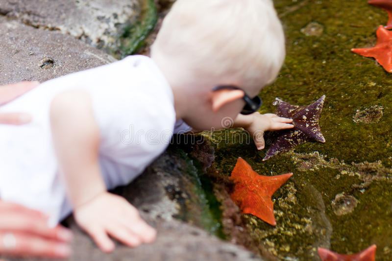 Toddler touching starfish stock photos