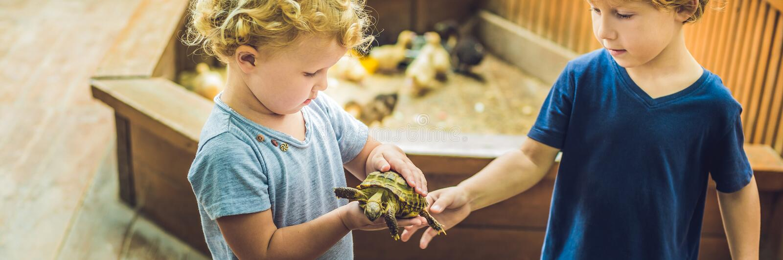 Toddlers boy and girl caresses and playing with turtle in the petting zoo. concept of sustainability, love of nature stock image