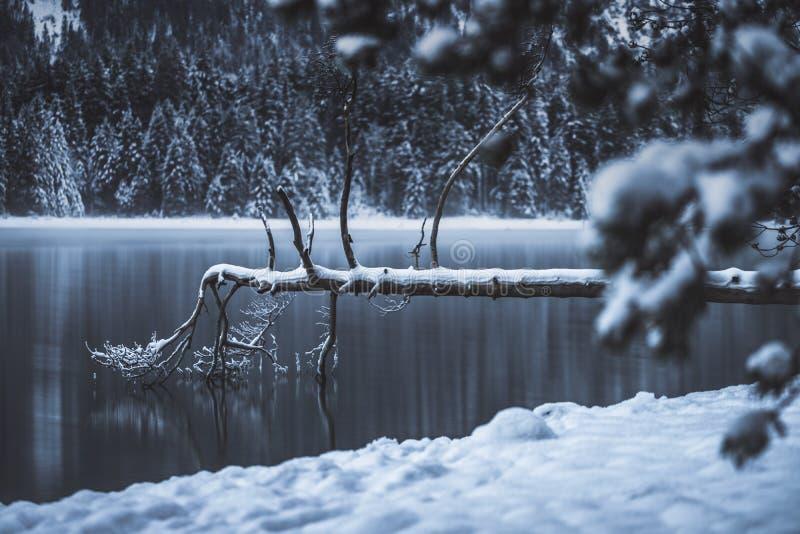 Todesbaum im See lizenzfreie stockfotografie