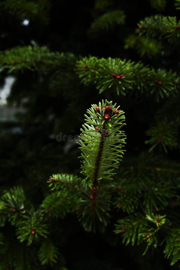 Todo verde y el sorprender imágenes de archivo libres de regalías