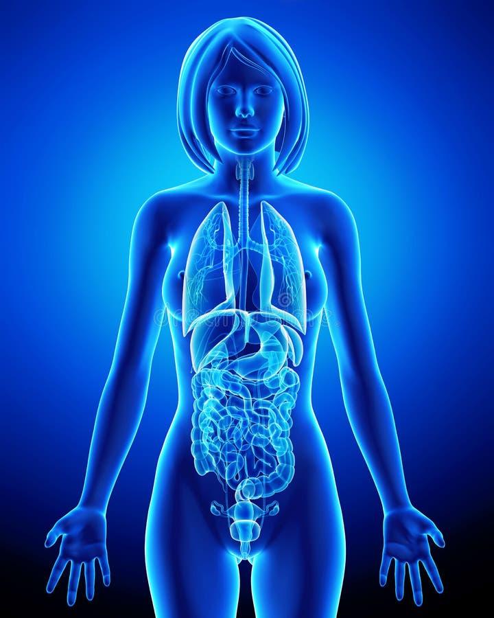 Todos los órganos del cuerpo femenino en radiografía azul colocan stock de ilustración