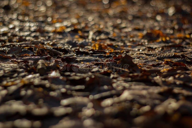 Todos los leafes son marrones imagenes de archivo