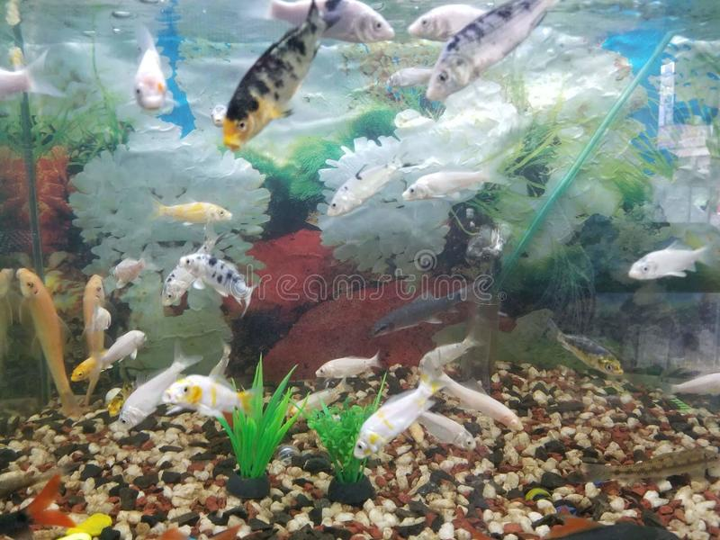 Todos los pescados están en el aqurium encajonado y el agua foto de archivo libre de regalías