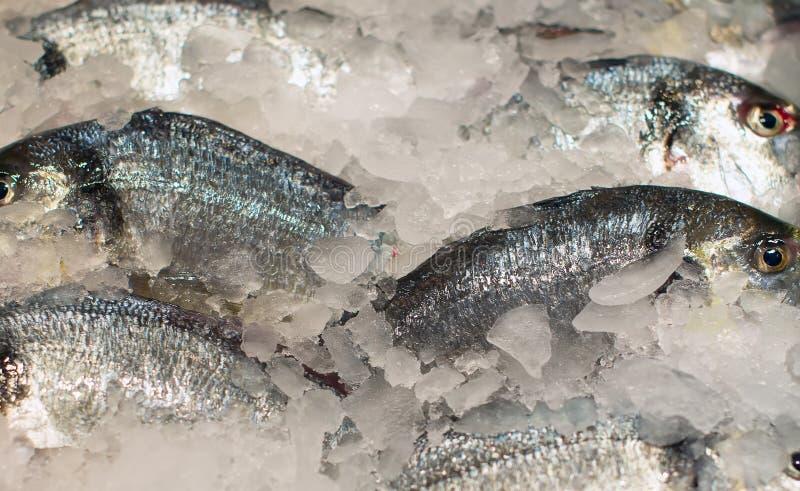 Todos os tipos de peixes congelados imagem de stock