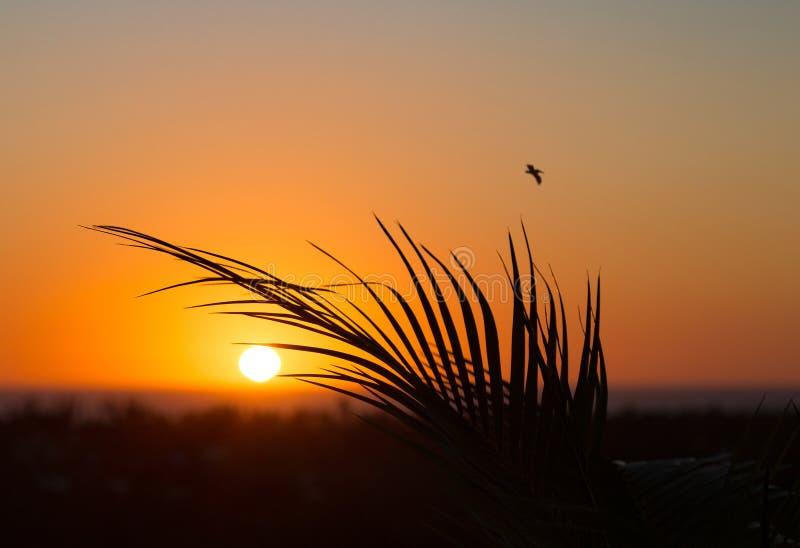 Todos Santos Rooftop Sunset imágenes de archivo libres de regalías