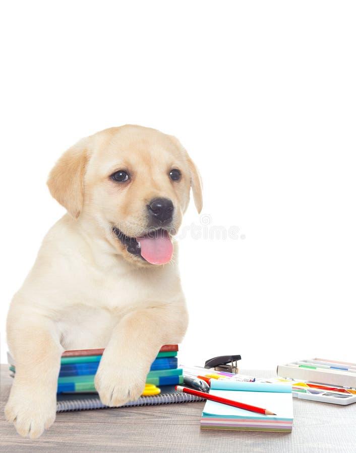 Toebehoren van school en Puppy royalty-vrije stock foto's