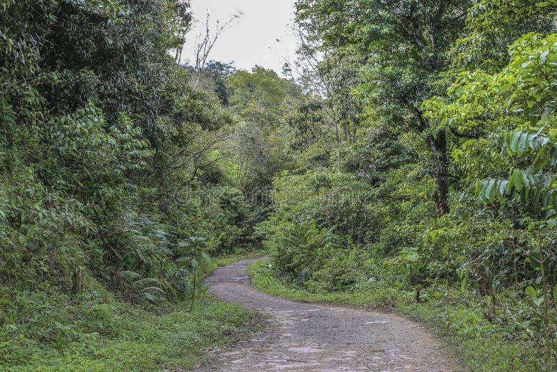 Toegangsweg bij de natuurlijke reserve van het Massief van Peñas Blancas, Nicaragua stock foto