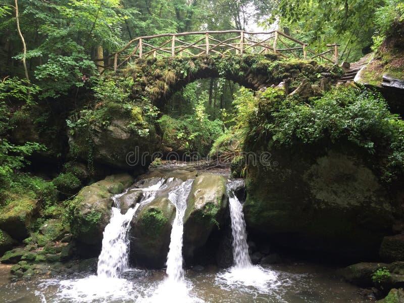 toerisme Luxemburg Zwitserland Oude houten brug over bergstroom in beschermde bos, ongebruikelijke, diverse vegetatie, kokers stock afbeelding