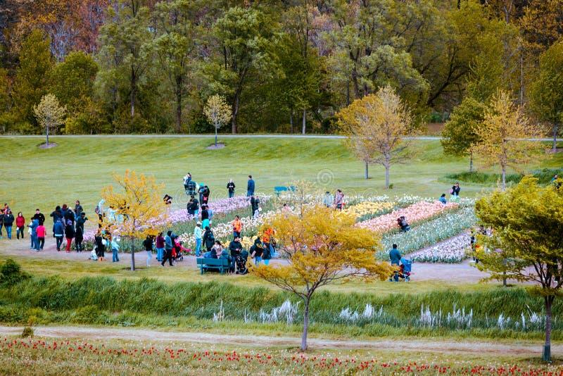 Toerist die de tulpengebieden op windmoleneiland in Holland Michigan tijdens het tulpenfestival bekijken royalty-vrije stock fotografie