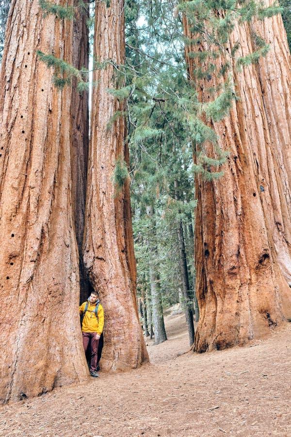 Toerist die met rugzak in Sequoia Nationaal Park wandelen stock fotografie
