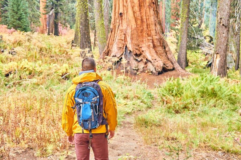 Toerist die met rugzak in Sequoia Nationaal Park wandelen royalty-vrije stock foto